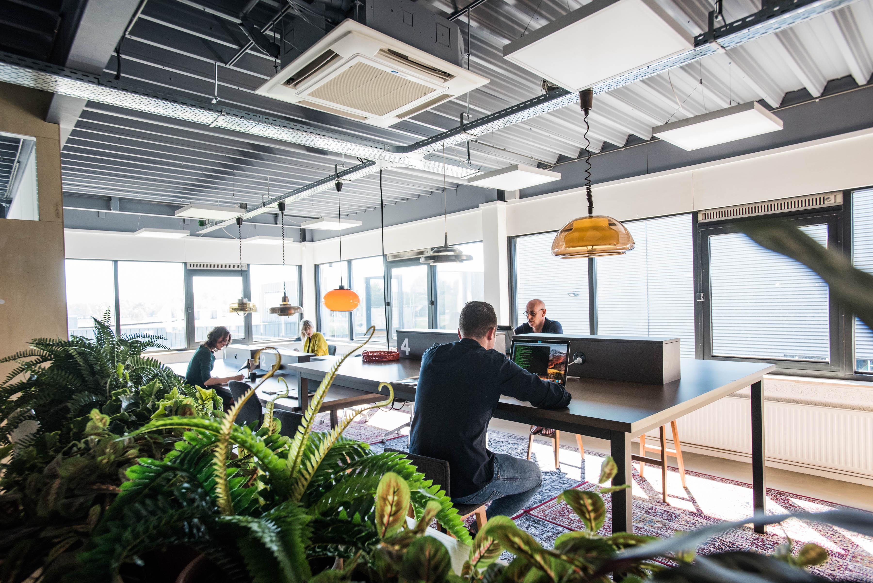 Gezonder op de werkvloer? Investeer in luchtzuiverende planten!